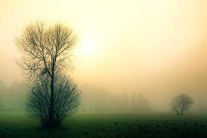 Stromy v podzimní mlze