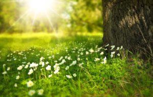 Slunečná louka se stromem